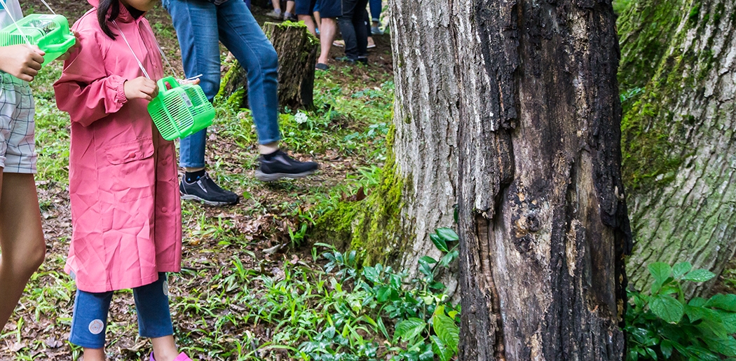 田舎体験 鬱蒼とした森 カブトムシ採り